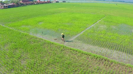 верный : Central Java, Indonesia - July 08, 2019: Beautiful aerial landscape of farmer working on green paddy fields with traditional tool. Shot in 4k resolution from a drone flying from left to right Стоковые видеозаписи