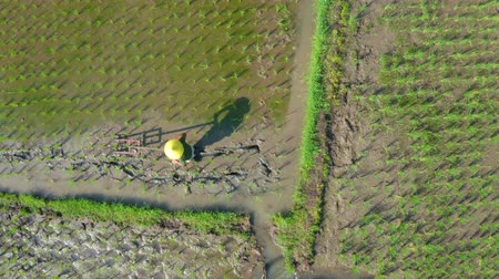 yemyeşil bitki örtüsü : Central Java, Indonesia - July 08, 2019: Top down view of Asian farmer working on the rice fields with traditional tool. Shot in 4k resolution from a drone