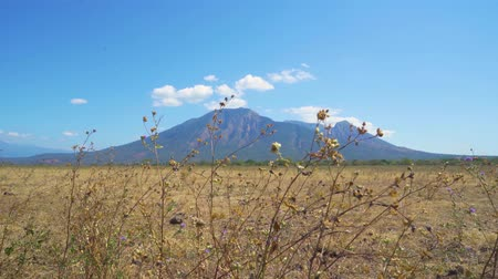 banyuwangi : Beautiful view of Baluran National Park with Bekol Savanna and Mount Baluran background during dry season in Situbondo, East Java, Indonesia. Shot in 4k resolution
