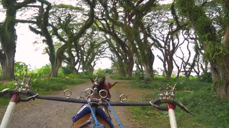 konie : Slow motion of horse carriage moving on the path under green trees in De Djawatan forest at Banyuwangi, East Java, Indonesia.