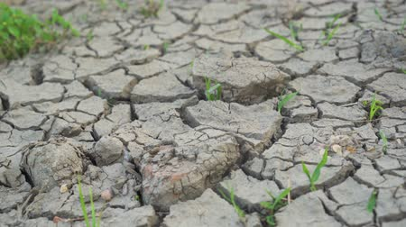 засуха : Water crisis with dry and cracked mud on farmland during dry season. Shot in 4k resolution