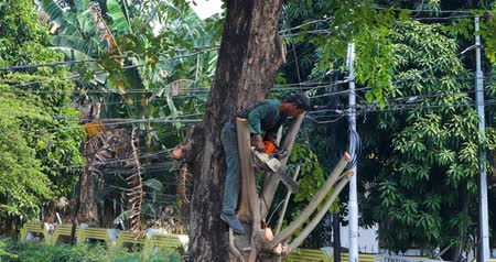 лесоматериалы : JAKARTA, Indonesia - September 10, 2019: Woodcutter cutting tree branches with a chainsaw at the park. Shot in 4k resolution