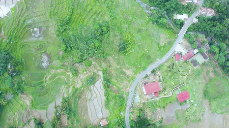 Top down view of tropical rice field with a road and village. Shot in 4k resolution from a drone