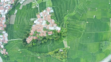 Top down view of village and green rice field in a valley. Shot in 4k resolution from a drone flying upwards
