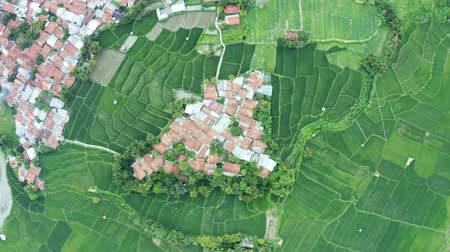 Top down view of crowded houses and green paddy field. Shot in 4k resolution from a drone flying down