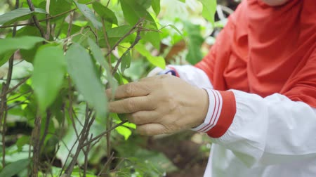 Closeup of mature woman hands cutting leaves and twig plant with a scissors for treatment in home garden. Shot in 4k resolution Wideo