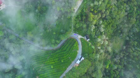 высокое разрешение : Beautiful aerial footage of a street passing through tea plantation at misty morning at Subang highland, West Java - Indonesia. Shot in 4K resolution from a drone flying right to left