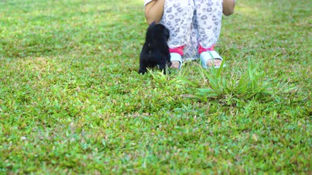 fajtatiszta kutya : Black little puppy playing with his owner while running on the grass at the park. Shot in 4k resolution