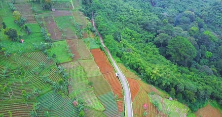 západ : Beautiful aerial footage of green farmland with road at Majalengka, West Java, Indonesia. Shot in 4k resolution
