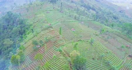 орошение : Beautiful aerial view of Panyaweuyan terraced plantation with lush plants at Majalengka, West Java, Indonesia. Shot in 4k resolution from a drone flying forward Стоковые видеозаписи