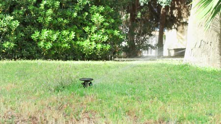 chuveiro : Water sprinkler in public park. Automatic irrigating system watering green grass lawn outdoor. Summer morning in Europe. Spray and drops of aqua watering leaves