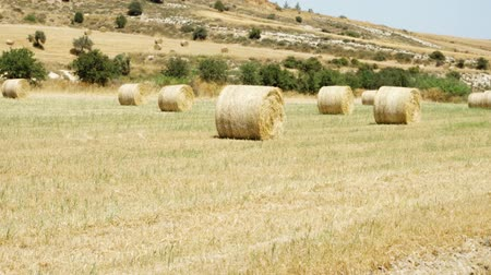 Beautiful field under blue sky with clouds in Larnaca, Cyprus. Rural landscape with golden haystacks on idyllic sunny day. Bales of hay lying on field during harvest and no people around. Camera moving up Stok Video