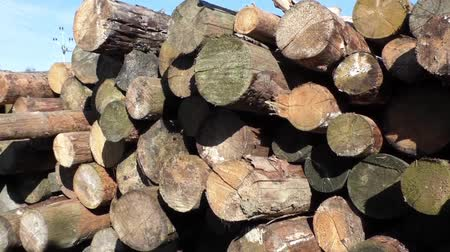 wood : Stack of wood logs