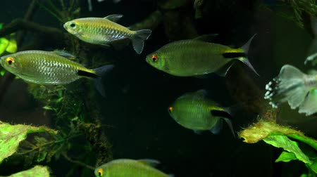 tail fin : Exotic tropical fish in the aquarium