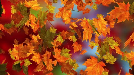 autumn : Autumn falling leaves Stock Footage