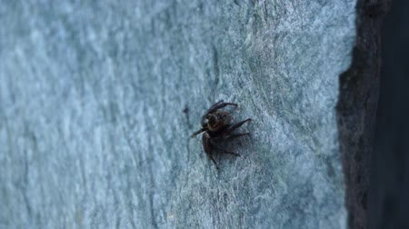 araneae : spider on stone wall