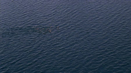 buz : Aerial view of the ocean surface. Fish jumping out of the ocean water Stok Video