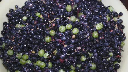winogrona : Amazing sprinkling, of pink and violet grapes close up, rotating to the right on black background. Eco product for healthy food. Excellent vegetarian macro with vibrant texture.