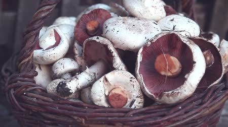 shiitake : Top view of variety of uncooked wild forest mushrooms in a wicker basket on a black background, Rotation 360. Mushrooms chanterelles, honey agarics, oyster mushrooms, champignons, portobello, shiitake Stock Footage