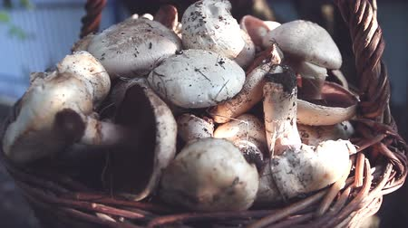 boletus edulis : Champignons in the old basket Stock Footage