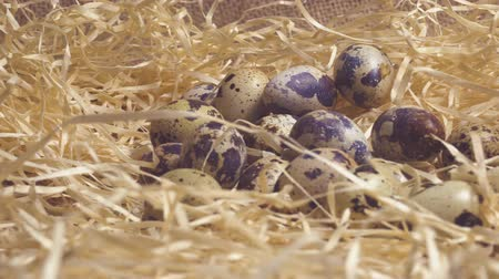 pink background : Quail eggs in a nest of wooden chips