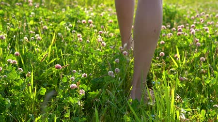 jetel : Mens bare feet walk on a green meadow with beautiful pink clover flowers on a Sunny summer day. Dostupné videozáznamy