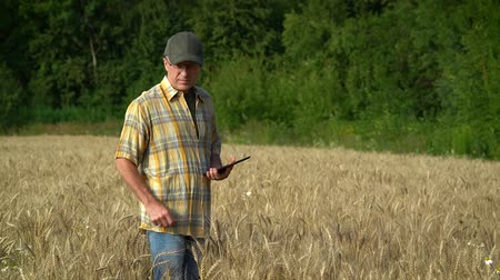 соя : A middle-aged agronomist examines the ears of wheat in the field and writes information on a tablet on a Sunny summer day.