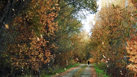 sikátorban : Yellow dry leaves fall to the ground in a beautiful leaf fall on the Park alley in the afternoon.