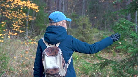 A slender pretty woman with a backpack on her back and a cap walks through the autumn forest among birches and firs and admires nature on an autumn day.