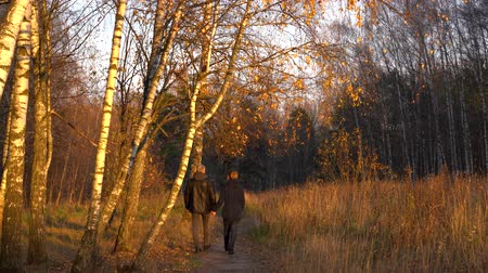 Slender man and woman walking in the autumn Park among the birches, holding hands and admiring nature at sunset. Stockvideo