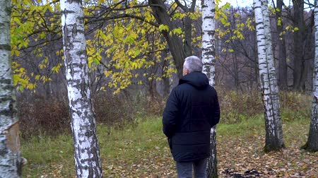 A slender man with gray hair in a blue jacket walks in the autumn forest among white birches and admires nature on a cloudy day.
