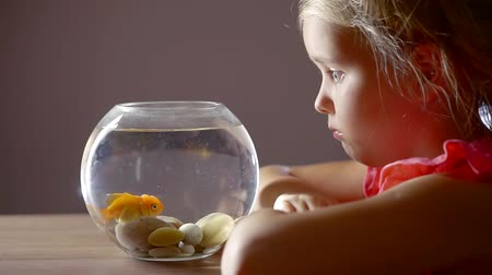 sea fish : cute baby girl sitting at the table and watching a goldfish in a round aquarium Stock Footage