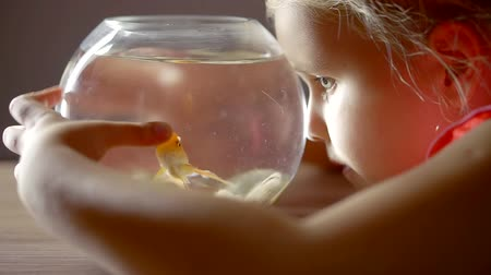 goldfish : Close up shot of a little blondie staring at the goldfish in auqarium.