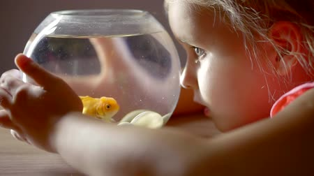 goldfish : small preschooler girl is talking with small goldfish in domestic aquarium, whispering desires Stock Footage