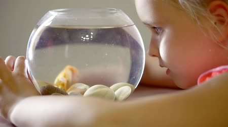 золотая рыбка : cute little girl is watching small goldfish in round aquarium, knocking over glass wall