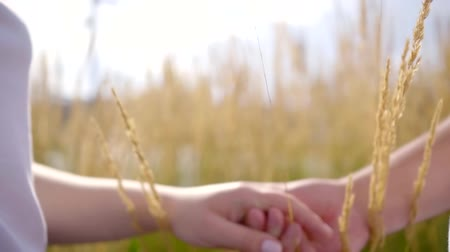 each other : two lovers are standing on a field of golden rye in summertime, touching hands to each other, man is kissing