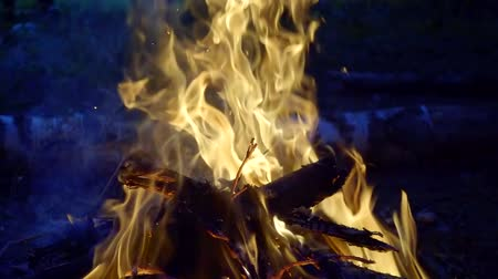 civakodás : amazing bright fire in forest, logs are burning and flame is rising up, close-up Stock mozgókép