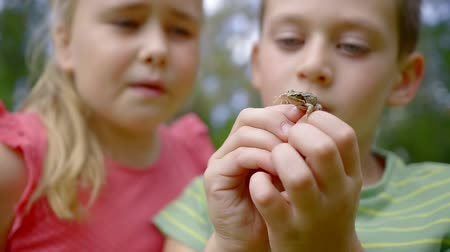 csodálkozás : Close-up shot of two lovely kids playing with tiny frog in park, Stock mozgókép