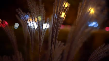 krzak : view of the road in the city through the bushes of decorative fluffy grass