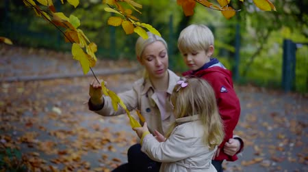 nanny holding : mother is showing to her preschooler son and girl a yellowed leaves in autumn day