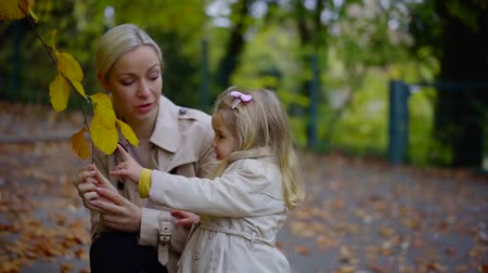nanny holding : little baby girl is viewing on yellowed leaves on tree branch in park in autumn, mother is speaking Stock Footage