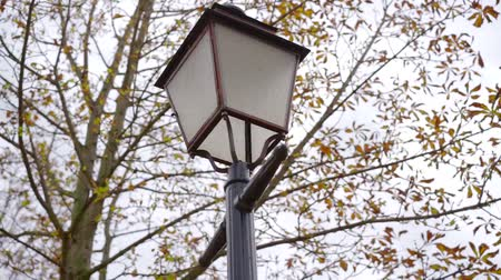 Below shot of a city lantern with tree branches on the background. Stock mozgókép