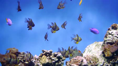 экзотичность : flock of beautiful coral fish in the habitat