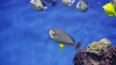 экзотичность : flock of interesting coral fish in a large marine aquarium. float on a blue background