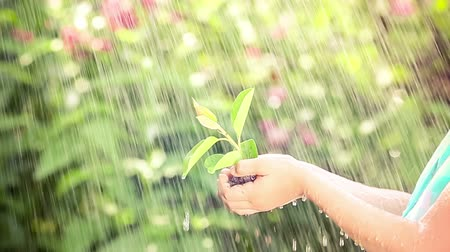 bitki : Young green plant in the rain. Child holding sprout in hands outdoors. Spring and new life concept. Earth day Stok Video