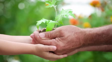 Child and senior man holding young plant in hands against green spring background. Earth day holiday concept. Slow motion 影像素材