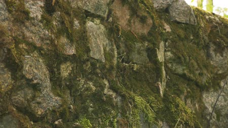 Green moss on old stone wall. Stone texture background