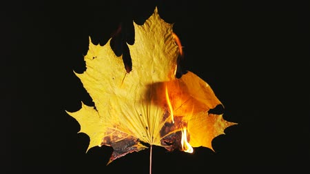 Burning maple leaf on black background Стоковые видеозаписи