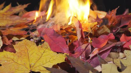 Burning autumn leaves. Fire burning dry leaf