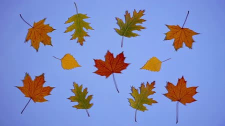 Leaves are dancing. Stop motion animation
